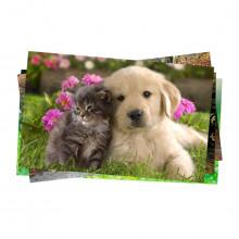 Caixa com 60 Unidades do Papel Fotográfico Glossy Adesivo 130g | tamanho A4 | Pacote com 20 folhas